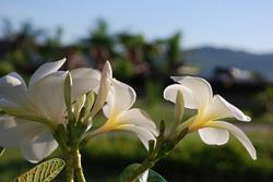 lombok.1.jpg